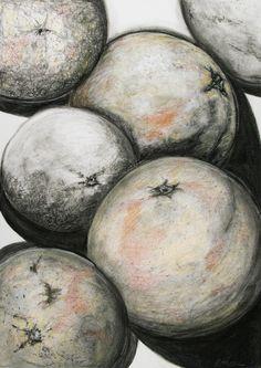 Florida Grapefruit charcoal drawing