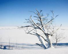 landscape photography snow winter blue tree fine art photography 8x10 print home decor office decor. $25.00, via Etsy.