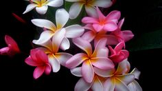 çiçekler resimleri: Yandex.Görsel'de 83 bin görsel bulundu