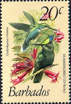 Barbados 1979 Birds SG 628 Fine Mint SG 628 Scott 501 Other West Indies Stamps HERE