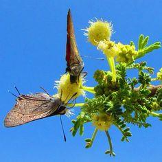 #فراشات   #butterflies