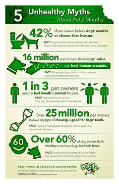 #pet #puppy #myths #facts #dog