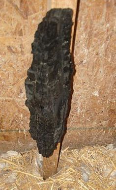 A piece of charcoal attached to the wall inside a coop can give your poultry access to a natural substance that will help absorb toxins and help to keep the digestive system in balance. chickens,Farm and garden,Farm Frie Raising Meat Chickens, Keeping Chickens, Chickens And Roosters, Pet Chickens, Black Chickens, Backyard Farming, Chickens Backyard, Backyard Poultry, Gallus Gallus Domesticus