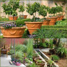 jardineria y paisajimo decoracion en jardines arboles y