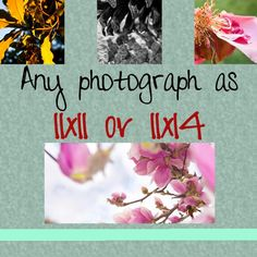 Any image as a 11x11 or 11x14 print by AulaniPhotography, $50.00. Handmade with love listed on #Etsy. Nature inspired photographs to pick from and decorate your home. Give your interior some spark.