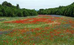Near Forcalquier, France by Daantjesheart