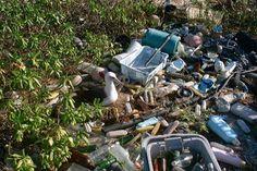INDIA™: Ocean Microbes Chomp on Plastics