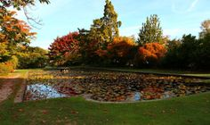 Take a closer look around Christchurch with this collection of unique local photographs. Use our image galleries to inspire and help you plan your next Christchurch trip. Lily Pond, Canterbury, Us Images, Homeland, New Zealand, Golf Courses, Explore, Gallery, Photos