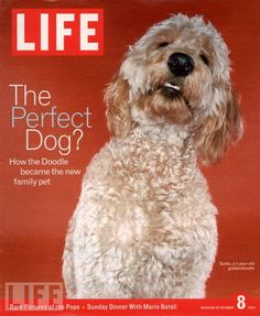 A 2004 LIFE with Sandie, a goldendoodle, modeling the cover.