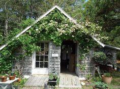 Cape Cod Lavender Farm - Harwich, MA