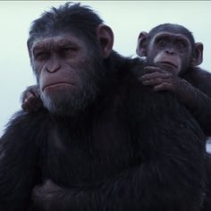 """Check Out The Final Trailer For """"War For The Planet Of The Apes"""""""