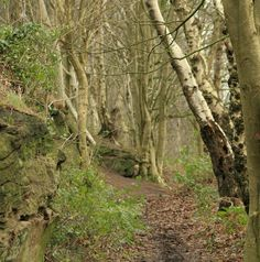 Walking the Sandstone Trail in Cheshire