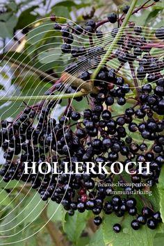 Der Schwarze #Holunder ist reif und wir erfreuen uns seiner dunkelvioletten Beeren. Direkt vor den Küchenfenstern gepflanzt, profitieren unsere Köche vom heimischen #Superfood. Die Beeren wirken Fieber senkend, Erkältungslindernd und stärken das Immunsystem. Die #Beeren des Schwarzen Holunders müssen grundsätzlich abgekocht bzw. erhitzt werden. Die leckerste Form des Abkochens ist das Hollerkoch oder Hollerrätsel, ein himmlisches #Kompott in jedem Tiroler Haushalt. Superfood, Form, Fruit, Elder Flower, Immune System, Berries, Household, Plants