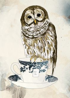 .my two favorites owls and tea