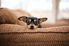 looks lost on that big couch!