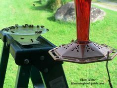 To prevent hummingbird feeder bees, wasps, yellow jackets or honey bees use tray or dish feeders or bee guards or hummingbird feeders with bee guards to keep the bees away. #beesupplies