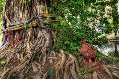 Thai Spirit house next to a bodhi tree in Chiang Mai, Thailand. For the novel TAPIOCA FIRE at http://www.amazon.com/Tapioca-Fire-Suzanne-Gilbert-ebook/dp/B00FYJQJDO/?qid=1387077602&sr=8-1&ref=tmm_kin_swatch_0&_encoding=UTF8