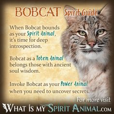 Get in-depth Bobcat Symbolism & Meanings! Bobcat as a Spirit, Totem, & Power Animal. Plus, Bobcat in Celtic & Native American Symbols and Dreams! Spirit Animal Totem, Animal Spirit Guides, Your Spirit Animal, Animal Totems, Native American Zodiac, Native American Symbols, American Indians, Animal Meanings, Animal Symbolism