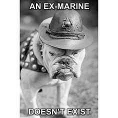 "In 1922 A bulldog was inducted into the United States Marine Corps by General Smedley Butler as a result of the Germans of WWI giving the Marines the name ""Teufel-Hunden"" or Devil Dogs. The dog was pr Marine Corps Humor, Us Marine Corps, Marine Recon, Once A Marine, Marine Mom, Military Humor, Military Life, Military Quotes, Military Terms"