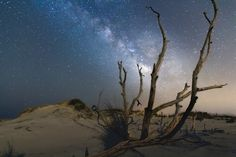 https://flic.kr/p/GyHgob | Back Bay Milky Way | Sitting among the deadwood and waiting for the Milky Way to rise. The tree was backlit from the light pollution of Virginia Beach while looking out over the Atlantic Ocean.