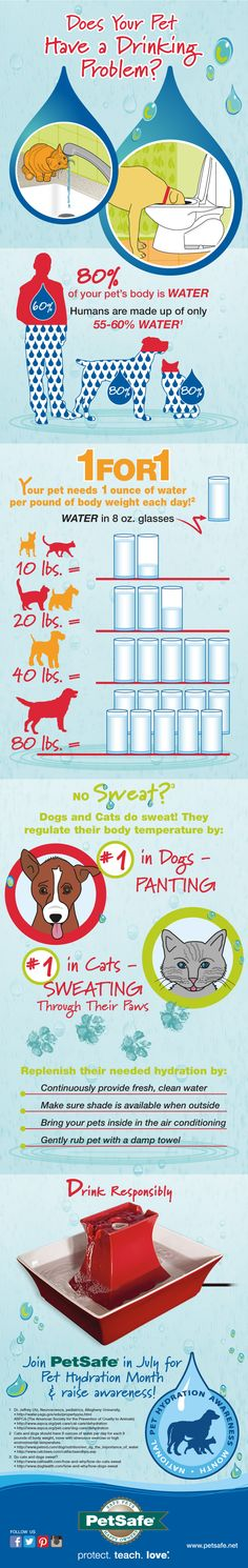 Make sure your cats and dogs stay hydrated and healthy in the hot months! @petsafe pet fountains are awesome.