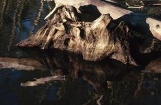 How to Clean Driftwood for Projects