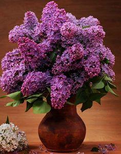 Лариса Дульчак'in # 840 medya içeriği ve analytics Lilac Tree, Lilac Flowers, Purple Lilac, Beautiful Flowers, Flower Centerpieces, Flower Arrangements, Lilac Plant, Lilac Painting, French Lilac