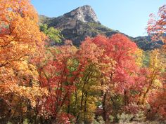 You Must Visit These 10 Awesome Places In Texas This Fall