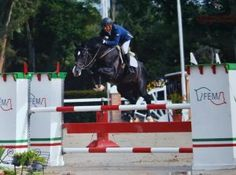 Find out what Judge Rob says about this 1.30m jumper stallion's technique.