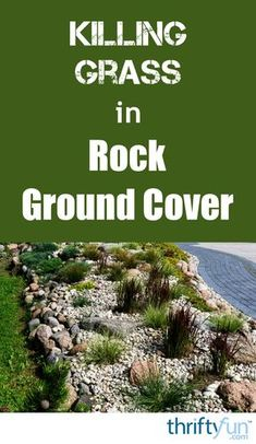 Landscaping done with rocks can be quite attractive especially for xeriscape gardens. However, having grass come up in your gravel is not attractive. This is a guide about killing grass in rock ground cover. Hillside Landscaping, Landscaping With Rocks, Front Yard Landscaping, How To Kill Grass, Killing Weeds, Landscaping Supplies, Landscaping Ideas, Backyard Ideas, Garden Ideas