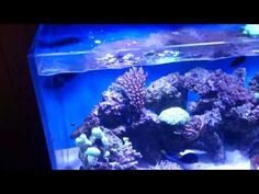 Positioning of live coral in a reef tank is very important - 3 week rule!