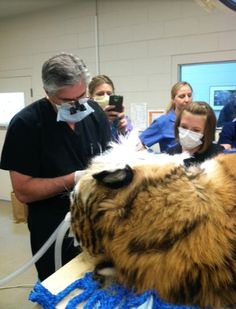 A look into the world of animal dentistry   Mouthing Off   Blog of the American Student Dental Association