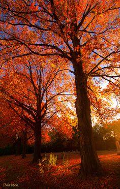 ~~Fall's Splendor ~ Horizons, autumn in Milwaukee, Wisconsin by Phil~Koch~~
