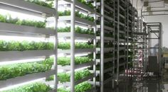 The Future of Food: Plant Factory Technology   http://www.powerhousehydroponics.com/future-of-food-plant-factory-technology/