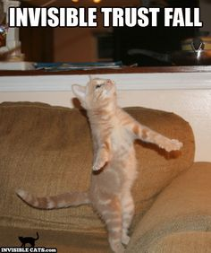 Invisible Cats, Invisible Trust Fall