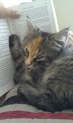 """* * """" Me kin beez yer bookmark plus block de pages so yoo can'ts read,ands gives meez some attentions."""""""
