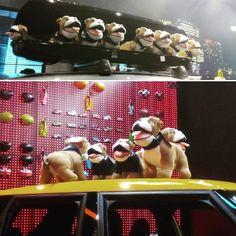 ¡Más perritos amantes de la #velocidad! #cars #speed #coches #fastandfurious #plush #MINI #MiniCooper #Amsterdam #Holanda #Netherlands #peluches #plush #softtoys #pelucheando