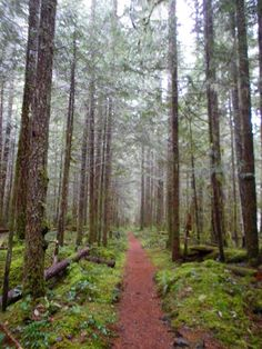 salmon river trail - mt hood national forest