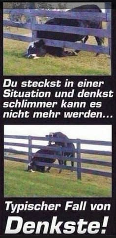 Typischer Fall von Denkste! Take A Smile, Just Smile, Good Humor, Good Jokes, Really Funny, Funny Cute, Funny Facts, Man Humor, Funny Moments