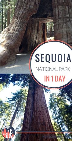 What to do and see in 1 day at Sequoia National Park #sequoia #findyourpark