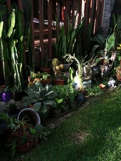 Cactus Garden in my Back Yard. Emily's