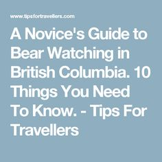 Bear Watching Tips For Novice Viewing Travellers In British Columbia Canada