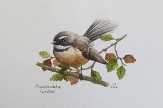 Piwakawaka - Fantail (with red beech) watercolour Jane Sinclair Exotic Birds, Colorful Birds, Painting & Drawing, Watercolor Paintings, Watercolours, Nz Art, Maori Art, Decoupage, Watercolor Animals