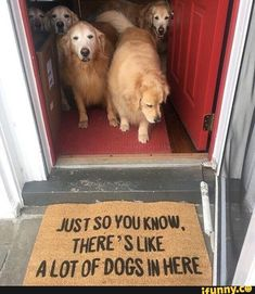 Funny Animal Picdump of The Day 178 Photos) animals animal dog animaux Funny Animal Memes, Cute Funny Animals, Funny Animal Pictures, Funny Cute, Funny Dogs, Funny Memes, Funny Photos, Dog Pictures, Funniest Pictures