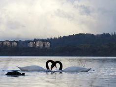 Lago Villarrica. Foto de Jaime Camilo Sandoval.