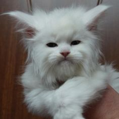 Im sorry but, this creature looks too much like the devil....