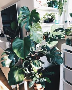 Ok! Let's have a great #monsteramonday everyone! Flower Gardening, Planting Flowers, Garden Design, House Design, Plants Are Friends, Raw Beauty, Green Plants, Plant Decor, Palms
