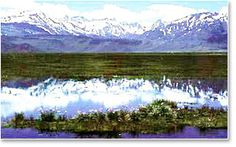 The Sierra Web   Bridgeport, California