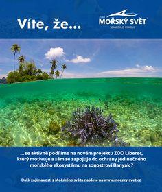 Víte, že... #morskysvet #morskysvetpraha #seaworld #seaworldprague #praha #prague #touristprague #zoo #viteze #ryby #zraloci #koraly #hledasenemo #newlogo #newvizual #coral #banyak Zoo, Praha, Sea World