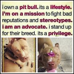 New | A community of Pit Bull lovers!